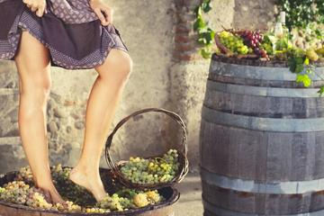 GRAPE STOMPING FROM CASTELLINA IN CHIANTI: traditions of the ancient...