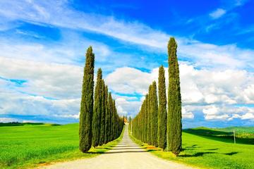 Private Tour in Val d Orcia: Discover the most Beautiful Hills in Italy