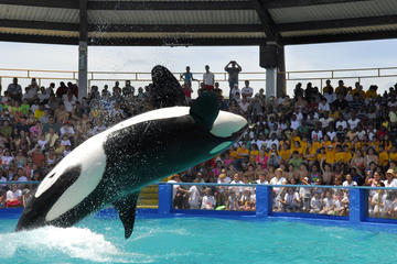 Miami Seaquarium with Animal Shows and Round Trip Transportation