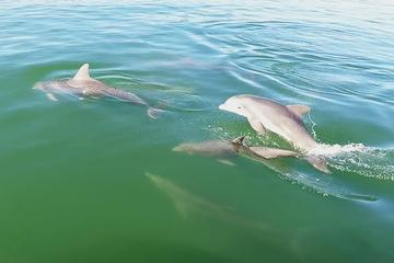 Book Dolphin Watch Cruise with Snorkeling to Shell Key on Viator