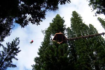 樹上のジップラインツアー