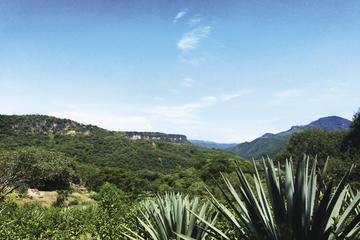 Excursión de un día cultural de Mezcal incluida degustación y...