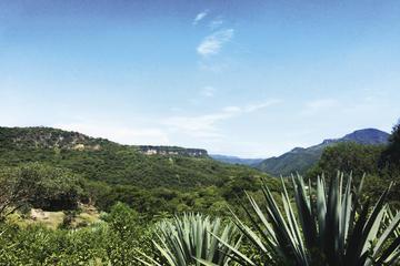 Viagem diurna cultural a Mezcal, incluindo degustação e almoço...