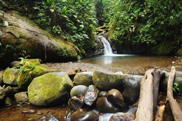 Tour privado: Mindo Nambillo Reserva de bosque Nuboso de Quito