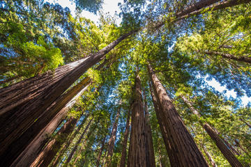 San Francisco and Muir Woods - City and Nature Tour