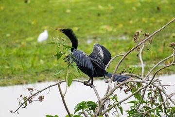 Birdwatching Tour in Tamarindo Tropical Forest area from Cuenca