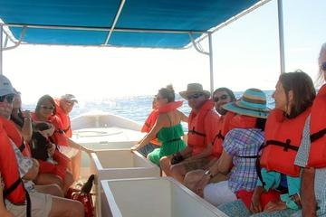 Los Cabos Day Tour: City Sightseeing, Glass-Bottom Boat Ride, Lunch and Shopping