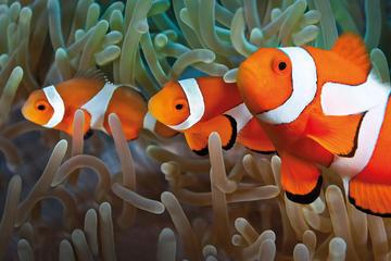 Toegangsbewijs voor het Palma Aquarium