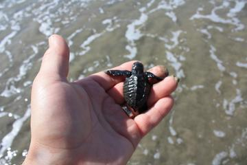 Acapulco City Tour: Divers, Chapel of Peace  and Baby Turtle Release