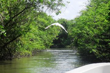Tres Palos Lagoon, Boat Ride Tour with Lunch from Acapulco