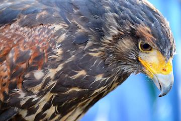 Book Beginners Falconry Experience on Viator