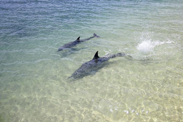 Tour di 3 giorni dei delfini di Monkey Mia, del deserto dei pinnacoli