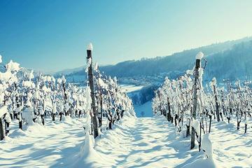 Winter Wine Tour