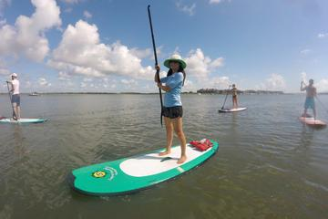 Book Charleston Paddleboard Rentals on Viator