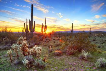 Hummer Nachttour in der Sonoran Wüste