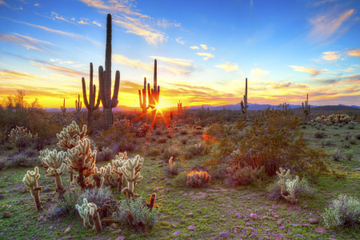 Tour nocturne en camion 4x4 dans le désert de Sonora