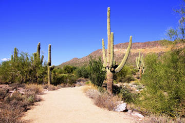 Day Trip U-Drive Desert Car Tour in the Sonoran Desert near Phoenix, Arizona