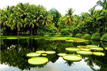 1 Day Xishuangbanna City Tour with Menglun Tropical Botanical Garden