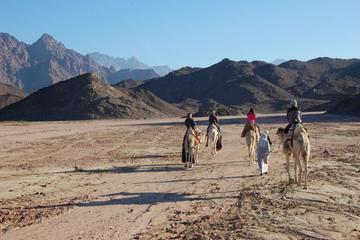 Barbacoa beduina en el desierto egipcio con traslado en 4x4
