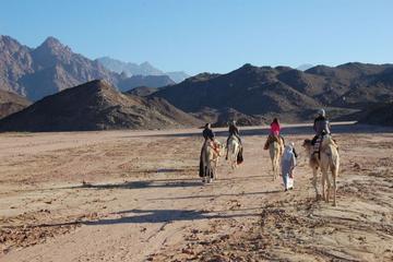 Barbecue beduino nel deserto egiziano in fuoristrada