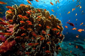 Croisière et plongée libre en mer Rouge à Ras Mohamed