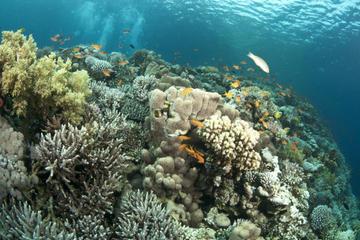 Crucero en barco con fondo de cristal y visita a los arrecifes de...