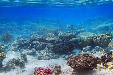 Crucero y buceo de superficie en la isla de Tiran