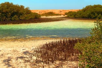 Excursion privée: mangroves