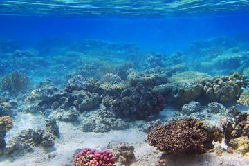 Insel Tiran– Bootsfahrt und Schnorcheln