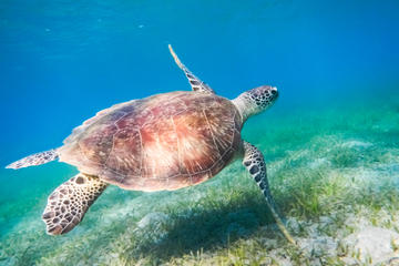 hourghada-tortue-mer-plongee