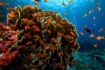 Ras Mohamed Red Sea Cruise and ...