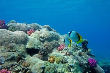 Submarino Sinbad bajo el mar Rojo