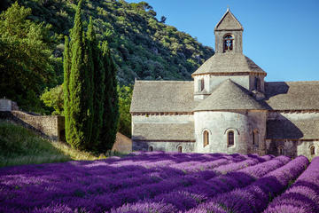Half Day Tour : Beauty of Lavender