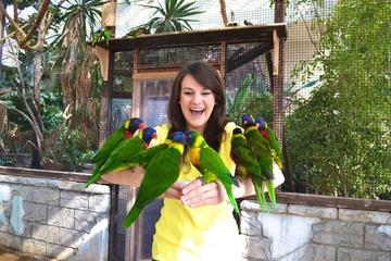 Billet d'entrée pour Bird Kingdom valable toute la journée