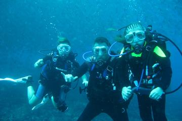 2-Dive Tour in Catalina Islands