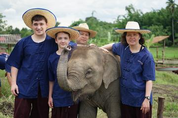 Half-Day Lanna Kingdom Elephant Sanctuary Tour in Chiang Mai