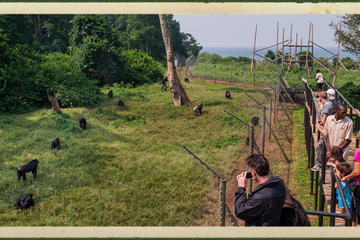 Ngamba Island Chimpanzee Sanctuary in...