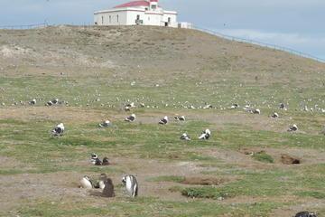 Marta Island, Magdalena Island and Punta Arenas