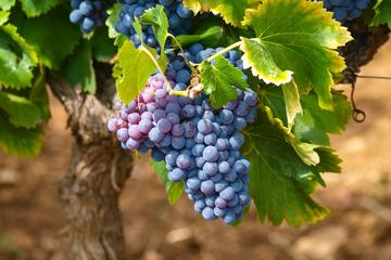 Half-day Excursion to Discover Italian Wine Traditions from Lake Garda