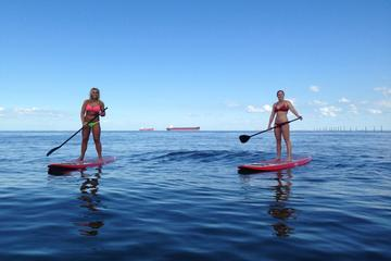 Dolphin Stand Up Paddleboard...