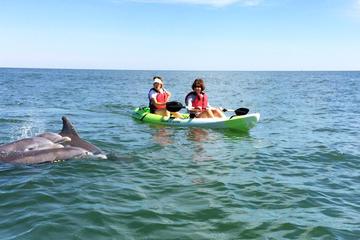 Day Trip Small Group Dolphin Kayak Eco-Tour near Virginia Beach, Virginia