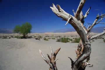 Dagstur fra Las Vegas til Death Valley