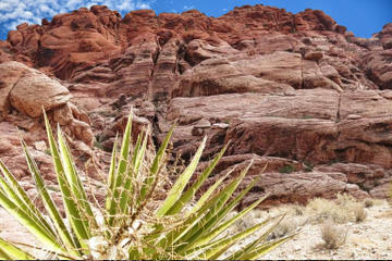 Rundtur till Red Rock Canyon