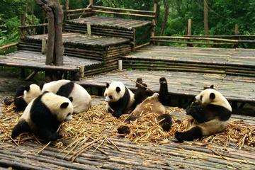 All Inclusive Boutique Tour of Chengdu Highlights