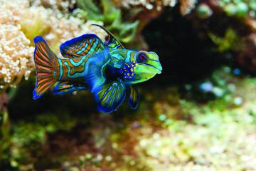 Entrée à l'Aquarium de la Nouvelle-Angleterre