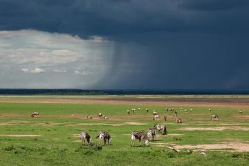 Ngorongoro Conservation Area Full-Day Private Guided Tour from Arusha