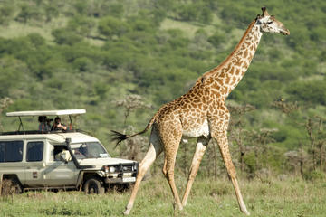 Tarangire National Park Full-Day Private Guided Tour from Arusha