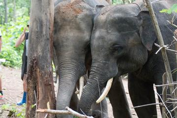 Half-Day Visit to Hug Elephant Sanctuary in Chiang Mai