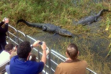 Excursão de aerobargo por Everglades...