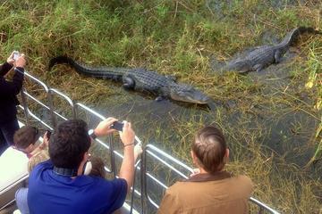 Excursión en aerodeslizador por los Everglades de Florida y encuentro...